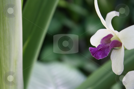 Tropical Flowers and Plants stock photo,  by Chris Torres