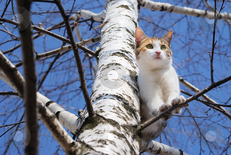 Cat on tree stock photo, A cat on a tree looking down. by Ivan Paunovic
