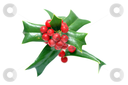 Sprig of ilex stock photo, Sprig of ilex with red berries isolated over white by Natalia Macheda