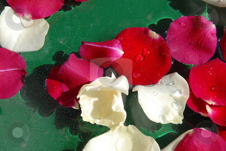 Rose petals background stock photo, White and red rose petals floating in water over green background by Julija Sapic