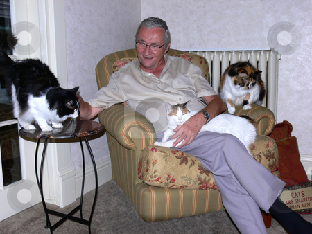 Man with three cat's. stock photo, A man is busy with three cats there all looking for his attention. by Horst Petzold