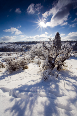 High Desert Winter stock photo, A crisp winter morning on a high desert rdige in Central Washington by Mike Dawson