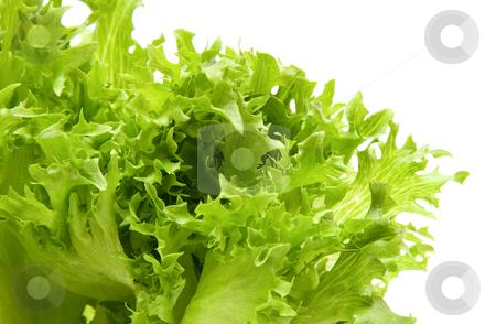 Lettuce stock photo, Lettuce by Andrey Butenko