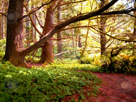 Colorful trees and ivy  stock photo, Walking path leading through colorful foliage in the forest by Jill Reid