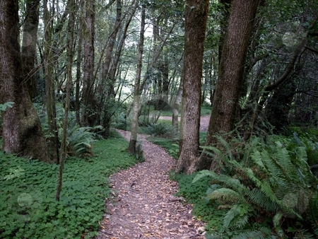Path through the forest stock photo, Walking path through the forest foliage by Jill Reid