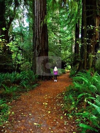 Blonde girl walking in forest stock photo, Blonde adult girl walking along a path in the forest by Jill Reid