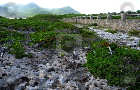 Coral path to stone wall stock photo, A coral path through foliage to a stone wall on a tropical island by Jill Reid