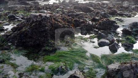 Grassy tidepool on rocky beach stock photo, Sky reflects in a grassy tidepool on a rocky beach by Jill Reid