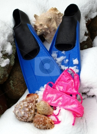 Blue snorkel fins, seashells, bathing suit in the snow  stock photo, Dreaming of the beach in the wintertime with snorkel finds, pink bathing  suit and seashells in the snow by Jill Reid