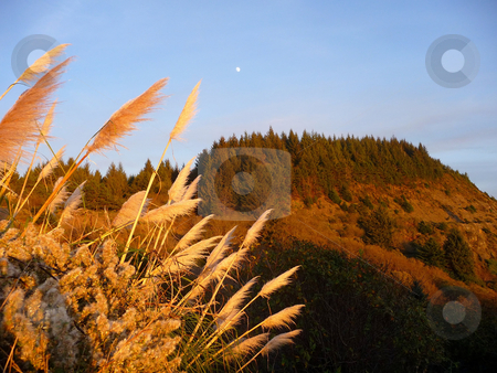 Moon rises over amber hillside stock photo, Moon rising over amber colored hillside with palmas grass in foreground by Jill Reid