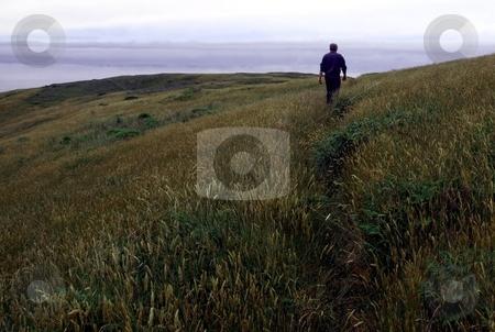 Man on grassy hillside stock photo, View of man walking along a grassy hillside on a foggy coast by Jill Reid