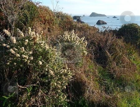 Scrubby hillside overlooking coast stock photo, Close-up of scrubby hillside overlooking a rocky coast by Jill Reid