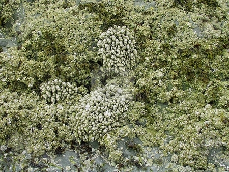 Coral and algae in a coastal tidepool stock photo, Close-up of coral and algae among coastal tidepools by Jill Reid