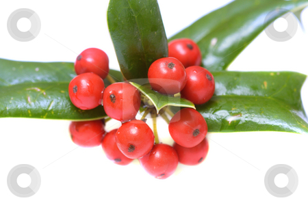 Ilex close-up stock photo, Macro of ilex berries isolated over white by Natalia Macheda