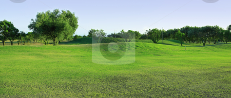 Golf-course with olive trees stock photo, Fragment of panoramic golf-course with olive trees by Natalia Macheda