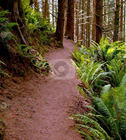 Hiking path through forest and ferns stock photo, Hiking trail through forest and fern foliage by Jill Reid