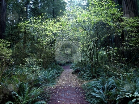 Tree Canopy over path in the forest stock photo, Walking path through the forest with foliage canopy by Jill Reid