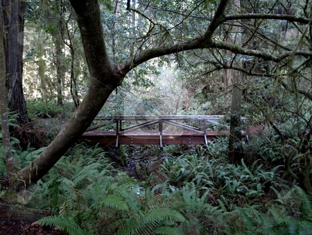 Wooden footbridge in forest stock photo, Wooden footbridge over a running stream in the forest by Jill Reid