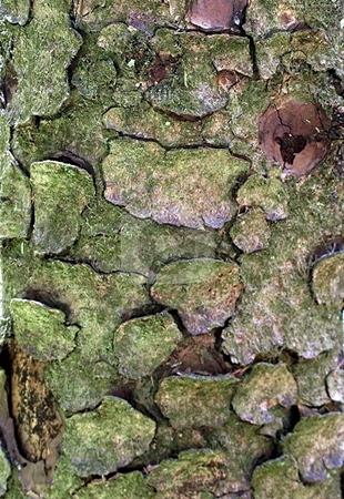 Tree bark texture stock photo, Close up of tree bark by Jill Reid
