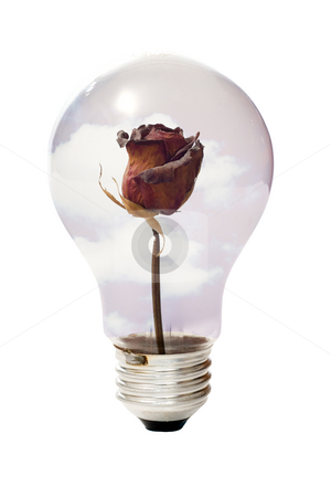 Environment Concept stock photo, An environment concept using a dried or dead rose inside a lightbulb, isolated against a white background by Richard Nelson