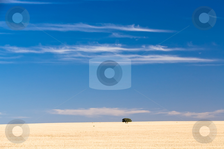 Dry land stock photo, A single group of trees sits isolated on a dry grass hill by Angus Benham