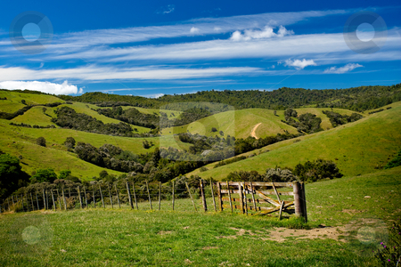 Green rolling hills stock photo, Green fields and rolling hills in New Zealand by Angus Benham