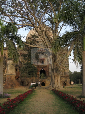 Tree and Tomb stock photo, An old tomb in Lodhi Gardens, New Delhi, India by Colin Elves