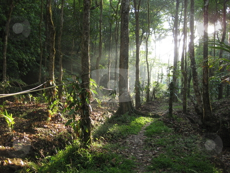 Idyllic Jungle Glade stock photo, Sunlight shining into an organic vanilla plantation by Colin Elves