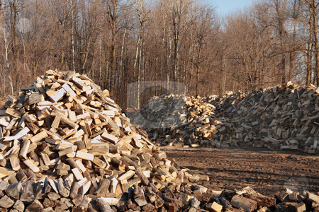 Firewood stock photo, Prepared firewood in forest clearing by R Deron