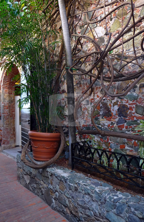 Colorful rock wall and vines along a cobblestone backstreet stock photo, A cool shady cobblestone backstreet by Jill Reid
