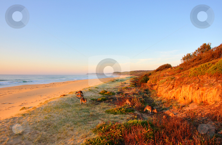 Sunrise by the beach stock photo, Sunrise by the beach in Tathra, NSW by Christopher Meder