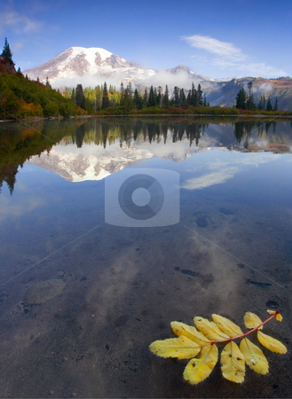 Autumn Suspended stock photo, Autumn leaves float on the still waters of Bench Lake as Mt. Rainier emerges from some morning clouds by Mike Dawson