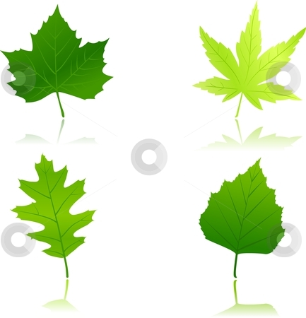 4 green spring leaves stock vector clipart, Maple, chestnut, oak and beach leaves in different shades of green. Use of 12 global colors and linear gradients. by Ina Wendrock