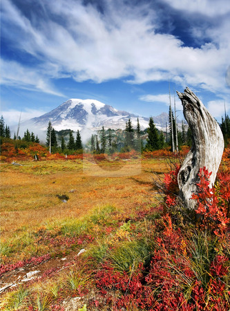 Autumn Majesty stock photo, Mt. Rainier from a meadow ablaze in fall color. by Mike Dawson