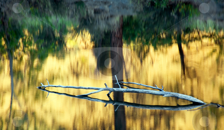 Reflections of Gold stock photo, Golden leaves reflect on the still waters of Tim's Pond near the Tieton River by Mike Dawson