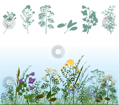 Herbs stock vector clipart, Silhouettes of herbs, herbs in meadow by Vanda Grigorovic