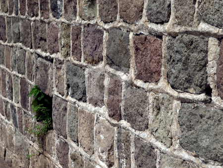 Life springs from masonry stone wall stock photo, Green foliage springs to life through stone and rock wall by Jill Reid