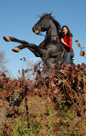 Rearing stallion stock photo, Rearing black stallion and young woman in vineyard in autumn by Bonzami Emmanuelle