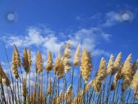 Feather Plants stock photo,  by Michael Felix