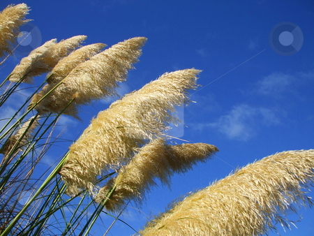 Feather Plants stock photo,  by Michael Felix