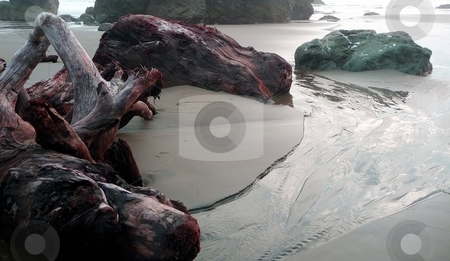 Driftwood and tidepools stock photo, Large pieces of driftwood lie along a riptide on a sandy shore in Oregon by Jill Reid