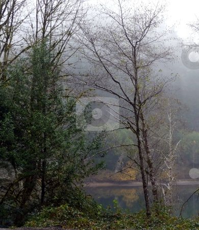 Trees reflected along misty river  stock photo, Trees reflect their leaves and color along a misty river by Jill Reid