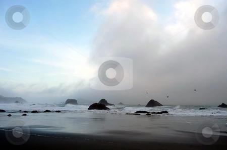 Birds soar in coastal fog in Oregon 664A stock photo, Seagulls fly in the rolling fog along the coastline in Oregon by Jill Reid