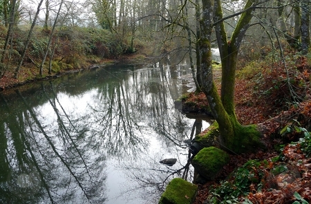Trees reflect in river with mossy rock bank stock photo, River reflects overhanging trees, mossy rocks line the river bank by Jill Reid