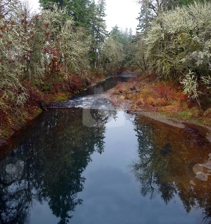 Colorful trees reflect in a river stock photo, Colorful trees and leaves reflect in a river by Jill Reid