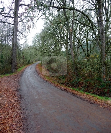 Country road in autumn stock photo, Paved road in the country during the fall season by Jill Reid