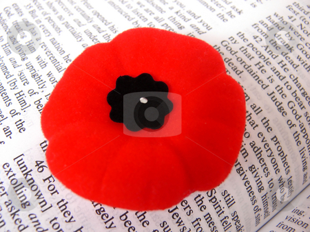 Poppy and Bible. stock photo, A veterans red poppy on a page of the bible. by Horst Petzold