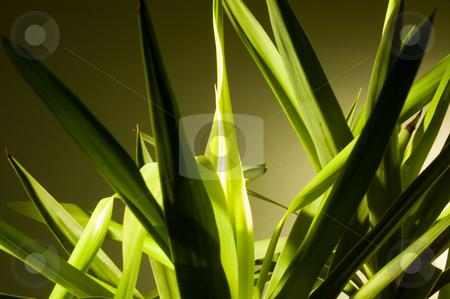 Indoor plant stock photo,  by Piero Biondo