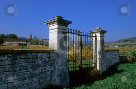 Old gate in the vineyards of Chassagne-Montrechet, Cote d'Or  stock photo, Old vineyard gate at Chassagne-Montrachet, Burgundy by GB Tittle