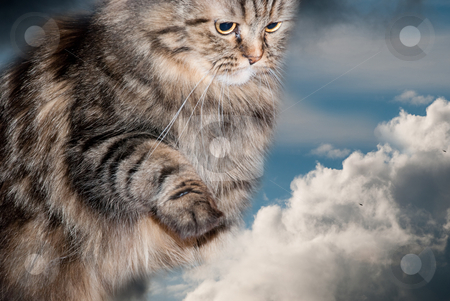 Cat and clouds stock photo, Cat's live in heaven by Alexey Rumyantsev